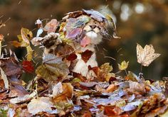 Lion cub playing in leaves