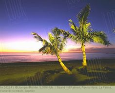Strand mit Palmen, Puerto Naos, La Palma, Kanarische Inseln, Spanien