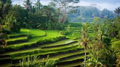 things to do in Bali - North Bali