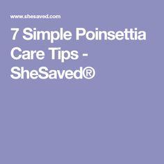 7 Simple Poinsettia Care Tips - SheSaved®