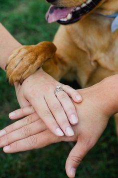 I want to do this with our dogs when we have our wedding pictures redone this fall