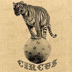 Circus Tiger vintage wild animal lion vintage by Circus Poster, Circus Art, Circus Theme, Circus Aesthetic, Lion Tamer, Human Oddities, Cactus Drawing, Animal Drawings, Drawing Animals