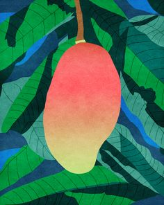 My Mango illustration for Instant Touch - A tropical scratch and sniff book- http://www.beccaallen.co.uk/#instant-touch