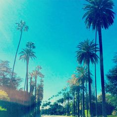 Lush palms + a clear blue sky...CA dreaming.