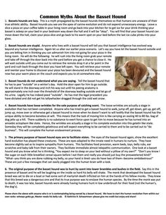 Basset hound myths
