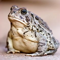 Make a toad abode - how to attract toads with a safe house
