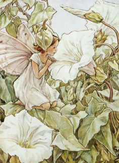 The White Bindweed Fairy - by Cicely Mary Barker