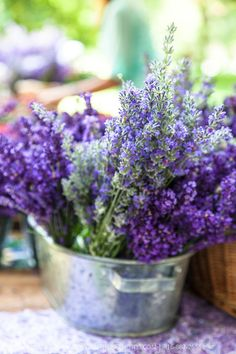 'Munstead' and 'Hidcote' English lavender in a metal basket at  farmers market…