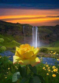 Wonderful pic. #flores
