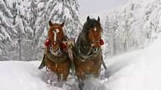 Download Wallpaper 1920x1080 Horse, Snow, Sled, Sledding Full HD ... Tier Wallpaper, Horse Wallpaper, Animal Wallpaper, Mobile Wallpaper, Beautiful Horses, Animals Beautiful, Pretty Horses, Pretty Animals, Beautiful Creatures