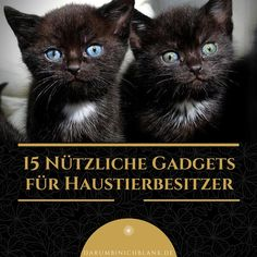 Darumbinichblank.de I 15 Nützliche Gadgets für Haustierbesitzer....Haustierbesitzer sollten diese #gadgets auf jeden Fall haben #hund #katze