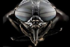 A Beautiful Collection of Insects - The Atlantic
