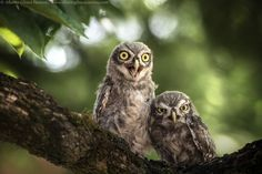 Ooh my goooodddddd!!!! by Alberto Ghizzi Panizza on 500px