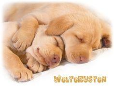 welterusten 2 slapende honden
