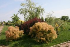 In EutopiaMall.com you can find all categories of plants: trees and shrubs, roses, conifers, perennials, flower bulbs, herbs, edibble plants...all home delivery!