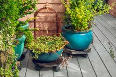 Elevate potted plants: Place containers on stands to let air circulate below and reduce the chance of rot on wood decks and porches.