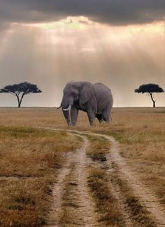 An Amazing Picture Of Elephant In Africa