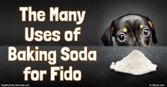 Baking soda is an old-new remedy for a myriad of problems, including removing pet smells from your dog and his favorite hangouts, and bathing his toys. http://healthypets.mercola.com/sites/healthypets/archive/2016/07/28/baking-soda-for-dogs.aspx