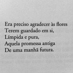 poesia sophia mello breyner