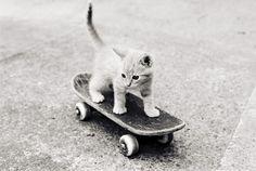 skateboarding kitty