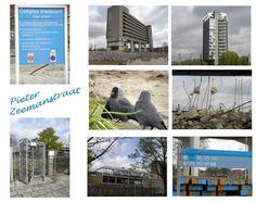 Vrede Oord Eindhoven, Philips Nederland/