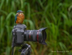 Photo Kingfisher...... by Martin Kavanagh on 500px