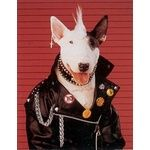 Punk Rock EBT #BullTerrier
