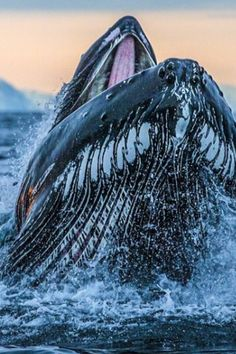 Wow. Humpback whale. More