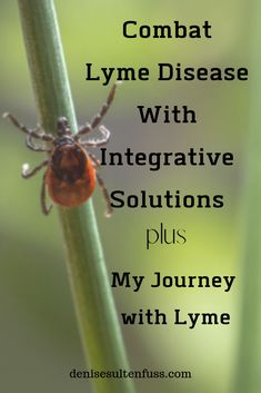 Thanks to a prescription of skillfully combined oral antibiotics, a Lyme Diet, and integrative solutions, I finally reclaimed my health. Christian Women, Christian Living, Christian Faith, Natural Cures, Natural Healing, Whole30 Program, Anti Inflammatory Diet, Lyme Disease, Christian Encouragement