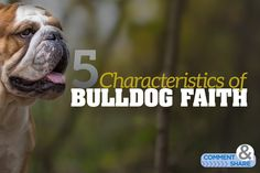 5 Characteristics of Bulldog Faith