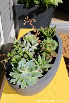 Caring for Outdoor Succulents