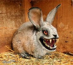 'Deadly Cute - Open photoshop contest is now closed. Animals And Pets, Funny Animals, Cute Animals, Strange Animals, Fantasy Creatures, Mythical Creatures, Animal Mashups, Images Gif, Scary