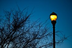 Light pollution contributing to fledgling 'fallout': Turning street lights off decreased number of grounded fledglings