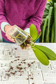 Top 10 : vos articles préférés en 2020 sur le site de Détente Jardin | Détente Jardin Horticulture, Voss Bottle, Hibiscus, Orchids, Floral, Plants, Aide, Articles, Gardening