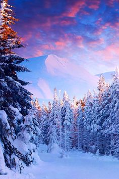 Snow Forest, The Alps, Switzerland