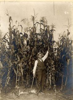 """Corn field. Kansas, 1895 (Now you should understand the line...""""The corn is as high as an elephant's eye..."""""""