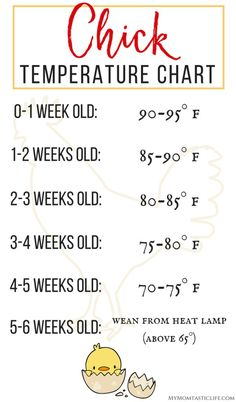 The First 6 Weeks of Raising Chicks – Guide For Beginners Chick Temperature Chart – Raising Chicks For Beginners – Week by week temperature chart, plus tips and advice on what to expect week by week when raising backyard chickens. Portable Chicken Coop, Best Chicken Coop, Building A Chicken Coop, Chicken Coup, Raising Backyard Chickens, Baby Chickens, Keeping Chickens, Urban Chickens, Bantam Chickens