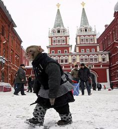 meanwhile in russia Russian Money, Meanwhile In Russia, Trans Siberian Railway, Monkey 3, Funny Sites, Winter Gear, Little Monkeys, Top Photo, The Funny
