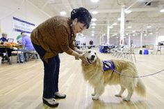 Therapy dogs cheer up FEMA workers, flood victims in Longmont