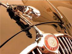 golden leaping Jaguar hood ornament 8x10 classic car photo, Symbol ...