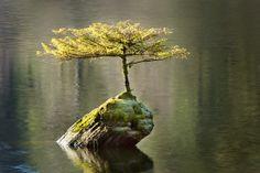 Островок жизни. © Ian Beveridge