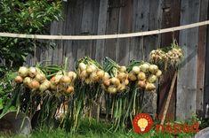 Po 50-tke dajú do poriadku to, čo ste celé roky kazili: 10 potravín, ktoré vyplavia kilogramy, zlikvidujú choroby a pomôžu kĺbom! Onion, Vegetables, Plants, Garden Ideas, Gardening, Sodas, Acute Accent, Syrup, Onions