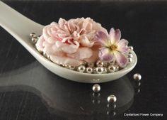 Miniature rose 'Cupcake' & micro-mini rose 'Baby Ballerina'