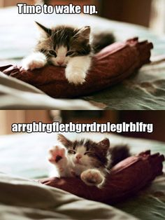 Kitty sleeps!