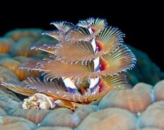 Beauty of the underwater world - 37 Pics   Curious, Funny Photos / Pictures