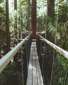 A treetop adventure worth having!