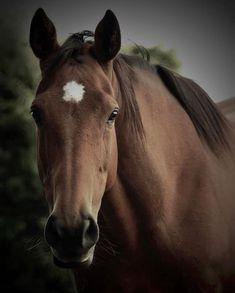 Wild Horses  | TheSpectrumWorkshop.com • Prints & Artist Designed Goods Inspired by Life's Adventures