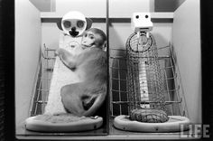In the 1950's I conducted an experiment where I separated infant monkeys from their mothers 6-12 hours after birth and raised them with surrogate mothers. One mother was made of heavy wire mesh and the other with wood, foam and cloth.