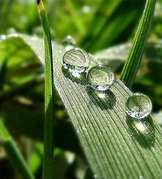 A traveling trio of dew drops. Thanks to Flower Story (FB) Dew Drops, Rain Drops, Water Photography, Amazing Photography, Drip Drop, Fotografia Macro, Water Art, Water Flow, No Rain