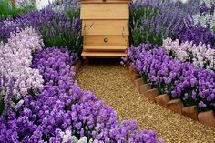 honey bee garden | H